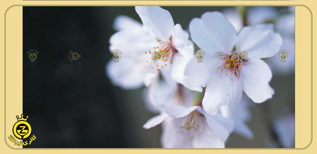 گل شکوفه در 1 سالگرد ازدواج